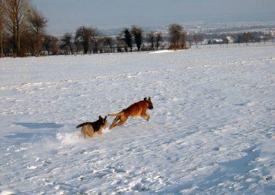 Eddy Jagd im Schnee